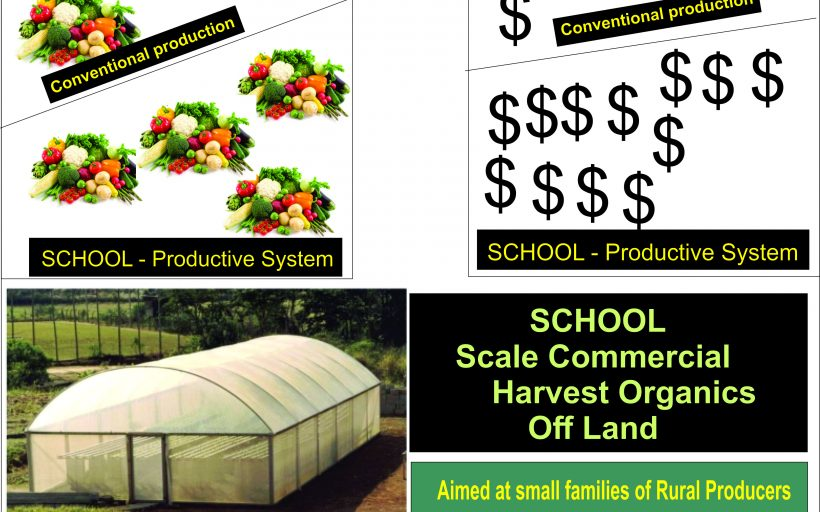 Learn from SCHOOL, eliminate pesticides, save water, produce food and income.