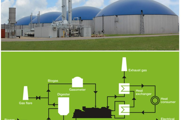 Biogas Community Kitchen And Food Chain