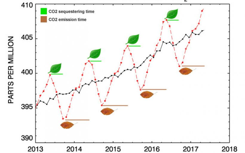 Carbon Sequestration by Leaves and Dead Plants Carbonisation