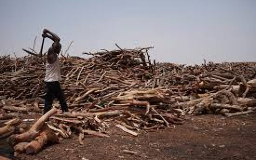 Combating Climate Change Through Biomass Alternatives