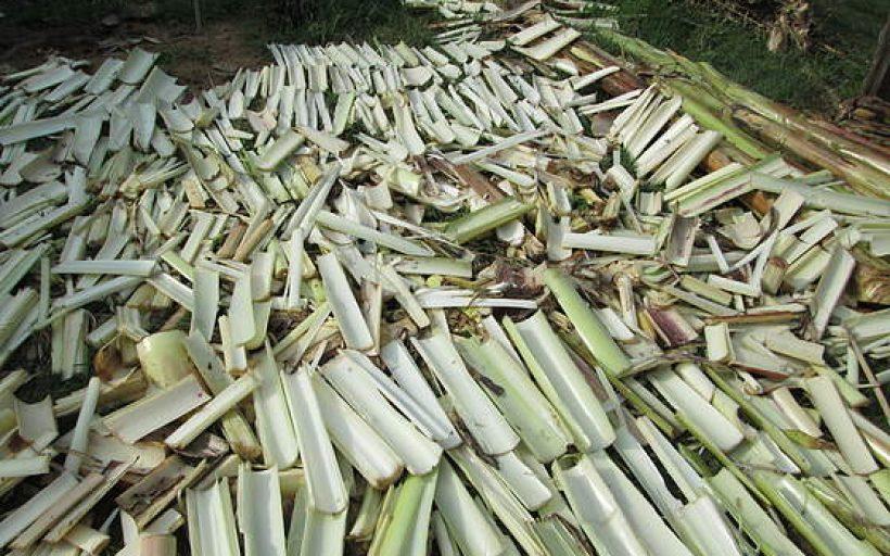 Eco-Banana Products